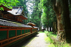 leading the way (Davide C.77) Tags: asia japan tokyo temple trail forest wood tress green buddhism
