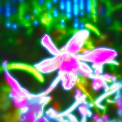 Des mots de tout les jours (Dom Guillochon) Tags: time life plants flowers humans day jour mots passion love fleurs photosyntesis everyday words amour dream rve