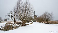 Winter .... (Alex Verweij) Tags: winter snow cold holland mill ice netherlands windmill sneeuw nederland skate kinderdijk molen ijs windmolen wilg koud knotwilg alexverweij
