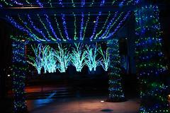 DSC09388.jpg (ntstnori) Tags: tokyo illumination  nightview koto toyosu