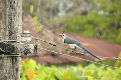 DSC_3169 (Debbie Prediger Photography) Tags: trip travel canada photography tour wildlife alberta nicaragua debbie cadogan prediger