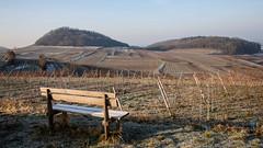 On a cold winter morning in the vineyards (Che Camera) Tags: landscape deutschland vineyards kaiserstuhl reben bischoffingen badenwrttemberg weinberge oberrotweil vogtsburgimkaiserstuhl