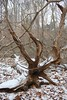 "Fallen tree • <a style=""font-size:0.8em;"" href=""http://www.flickr.com/photos/92887964@N02/8496495378/"" target=""_blank"">View on Flickr</a>"