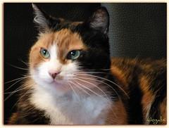 Belle Léa (Jogabi - Michèle) Tags: bej kittysuperstar bestofcats alittlebeauty saariysqualitypictures coth5 vg~catsgallery sunrays5