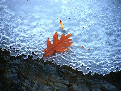 Last Leaf of Fall (Stanley Zimny (Thank You for 13 Million views)) Tags: park autumn trees winter white snow cold tree fall ice nature colors leaves last automne catchycolors leaf colorful colours seasons natural snowy fallcolors herbst freezing autum