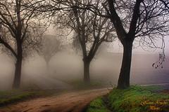 Stradine nella nebbia (Gianni Armano) Tags: streets nature fog photo foto natura piemonte terre fields lands valenza nebbia gianni alessandria nella campi pecetto stradine armano fleursetpaysages lelitedespaysages