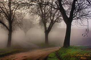 Stradine nella nebbia