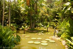 Lily pond (Adam_BT) Tags: singapore botanicalgardens