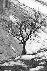 On the Hill_IMG_3402_bw (yukonchris) Tags: trees winter bw canada cold nature beauty landscape outdoors natural north hills yukon valley daytime northern taiga unspoiled lookingout borealforest canonef50mmf14 northof60 southernyukon yukonrivervalley canon7d whitehorsesouthernlakesregion