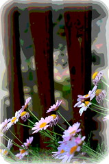 flowers fence effects jerusalem (Photo: Mike Goldberg on Flickr)