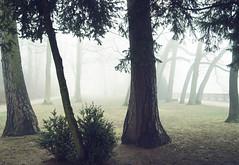t (Alex H. aus F. am M.) Tags: nebel hd heidelberg ruinen schlos heidelbergerschlos