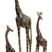 43. Group of Carved Wood Giraffes