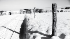 Cold HFF (memories-in-motion) Tags: schnee winter bw cold fence landscape shadows pole schwarzweiss zaun holz schatten hff pfosten