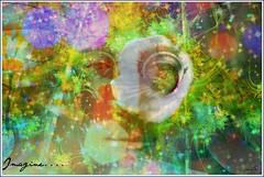 Imagine... (PaulO Classic. ©) Tags: canon textures johnlennon eos450d picmonkey