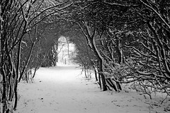 Snowy Pathway (B/W) (DaveJC90) Tags: camera city winter light shadow blackandwhite bw white snow black detail tree slr dark grey suffolk spring nikon bright snowy path magic sharp nights 1001nights footpath dull pathway 1001 sharpness magiccity d40 mywinners 1001nightsmagiccity mygearandmebronze mygearandmesilver blinkagain