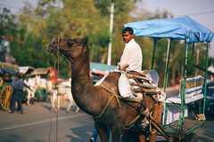 The Camel Rider (plaits) Tags: poverty india lake holiday green film beautiful stone kids analog forest 35mm canon children wonder landscape countryside cow tour village desert indian poor grain young 85mm taj mahal tajmahal mosque tourist camel experience sacred 5d colourful wonders sevenwonders villagers mkiii 7wonders