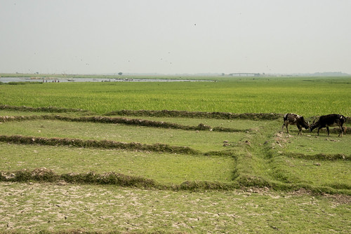 A landscape in Sunamganj, Bangladesh. Photo by Finn Thilsted, 2013.