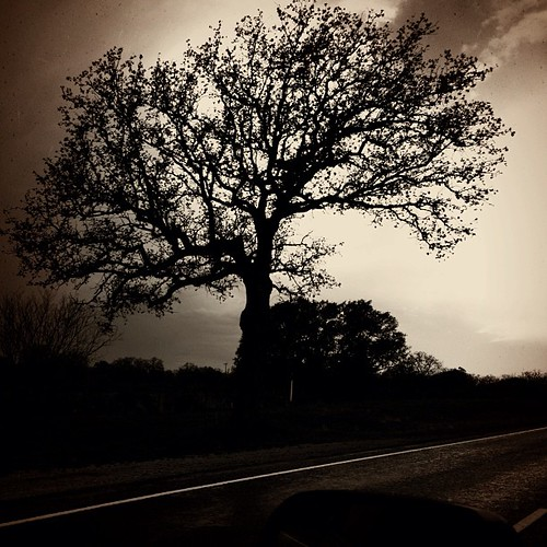 "#hillcountry #storm #tree #silhouette #igtexas #texas #tx #takenwhiledriving • <a style=""font-size:0.8em;"" href=""http://www.flickr.com/photos/20810644@N05/8618624178/"" target=""_blank"">View on Flickr</a>"