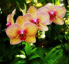hiloBotanical garden-111 (MiltonDonKeynes) Tags: ocean flowers color cool orchids tropical uncool flours tueday cool2 tripical uncool2 uncool8 uncool3 uncool4 uncool5 uncool6 uncool9 hilobotanicalgardenaprin2013 uncool7forray