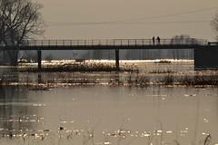 Most na Biebrzy (m.kotiuk) Tags: most biebrza gonidz