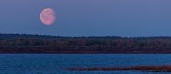 4Y1A9529 Yenisei (Ninara) Tags: jenisei russia yenisei  sunset moon  siberia siperia   red   arcticcircle midnight midnightsun