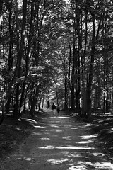 Organic couple (Ren-s) Tags: fort forest blackandwhite noiretblanc arbre tree branches feuilles leaves leaf path chemin dirt terre sol shadow ombre couple randonne hike brussels bruxelles europe boisdelacambre