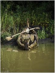 Traditional Papyrus Boat on Lake Tana (Luc V. de Zeeuw) Tags: boat ethiopia papyrus traditional water bahirdar amhara