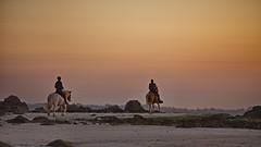 Chevaux au couchant (brume2mer) Tags: horse cheval plage nocturne soirée cavalier balade bretagne keremma plouescat finistère bzh seaside sea sunset outside ride riding beach sand