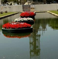 carto de visita (luyunes) Tags: praiavermelha riodejaneiro olimpada2016 flores flor praa motomaxx luciayunes