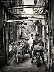 Life Fragments @ Marrakech (iii) (Jos Carlos Costa) Tags: marocco marrocos marrakech street people arab life bw jccosta canon6d
