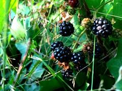 16-240 (singer.vicky) Tags: blackberry