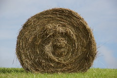 Coiled Hay Bale (steve_whitmarsh) Tags: scotland aberdeenshire rural field wheat yellow hay