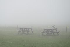 Searching (martin_q) Tags: liscannor countyclare ireland olympus em5mkii mzd1240mmf28 omd fog