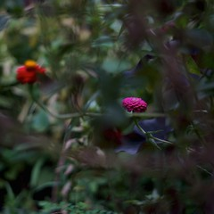 """""""WILD FLOWER"""" ( ) Tags: kern makroswitar 50mm f19 park forest trimming masterphotos"""