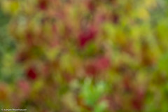 Spaziergang im Steinbruch - Herbstfarben (J.Weyerhuser) Tags: hintergrund herbstfarben unscharf steinbruchweisenau herbst farben