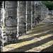 20130109   Chichen Itza, Yucatan, Mexico 009