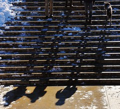 Knees Please (Tim Schreier) Tags: nyc newyorkcity snow nemo centralpark manhattan snowstorm lincolncenter newyorkny 2913 292013 afternemo