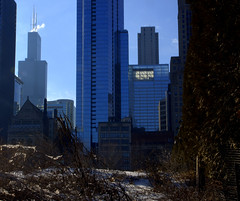 Lurie Garden (myfotomaya) Tags: chicago loop searstower michiganave grantpark millenniumpark chicagowinter chicagodowntown luriegarden willistower