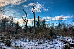 Hutewald 10 (Sunstonecruiser) Tags: wood trees winter light sun abstract color art nature sunshine forest outdoors deutschland licht landscapes countryside oak eiken bomen europe view january wiese dramatic natuur surreal hills agriculture sunlit oaks landschaft wald cloudysky weiland landschap badbentheim luchten eiche kleur wheatfield bentheim bossen spazieren broekland struiken deutscherwald heuvellandschap northwesteurope waldlandschaft landscapedreams obergrafschaft europeanlandscape marchen deutschelandschaft grafschaftbadbentheim brookwiesen