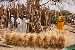 Market Command - Sudan (UNEP Disasters & Conflicts) Tags: africa sudan training environment climatechange drought conflict disaster peace development agriculture business unep unenvironment