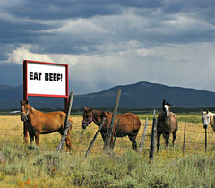 Eat Beef ! (Sandra Leidholdt) Tags: horses caballo cavalli cavalos sign horse equine signage eatbeef cavalo animals us america usa americanwest chevaux cheval sandraleidholdt pasture statement diet choices meat findus food rand ranch jacksoncounty mangerduboeuf horsemeat labels controversy foodproducts dna unitedstates mountains animal field rockymountains colorado