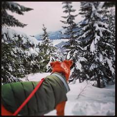 Kendall Lake (asclepius6) Tags: mix cross snowshoeing australiancattledog kenzie photostream bassetthound chowchow redheeler rescuedog kendallpeak