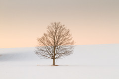 Orange Tree (Christopher Brian's Photography) Tags: trees winter snow ontario canada colour minimalism canonef2470mmf28lusm canoneos7d