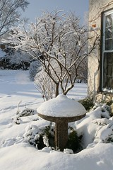 Winter (erin lanigan) Tags: winter snow birdbath burningbush