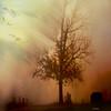~~~ fly away home ~~~ (xandram) Tags: light tree cemetery birds fog memories textures shirley passing tombstones photohop tatot