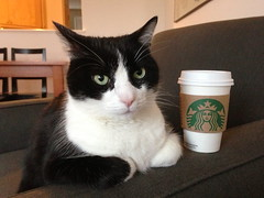 Oliver and Starbucks (Mr.TinDC) Tags: pet cats pets cute cup coffee animals cat oliver kitty tuxedo starbucks drinks kitties dcist felines tuxedocat beverages iphone sbux cupofcoffee themostinterestingcatintheworld