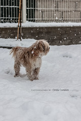Laki (Cinzia Costanzo | Photographies) Tags: winter dog snow animals landscapes neve wintertime inverno paesaggi winterlandscapes
