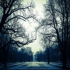 Horror story (Daniel*1977) Tags: park morning trees snow cold tree europe phone image walk daniel creative picture cellphone cell samsung poland note story galaxy horror warsaw imaging 1977 cellphonesamsung note2 kulinski masovianvoivodeship daniel1977 samsungimaging samsunggalaxy samsunggalaxynote danielkulinski galaxynoteii