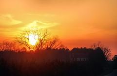 03.04.2013 (itsbrandoyo) Tags: sunset abandoned rural grove country walnut plantation