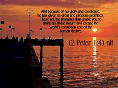 2 Peter 1:4 nlt (Bob Smerecki) Tags: life 2 love church true rock stone easter born high truth heaven king christ god spirit brother father 14 ghost religion jesus lord christian mount holy peter moses again olives lamb bible judge alive commandments messiah risen salvation abba sanctuary prayers tabernacle nations sabbath blessed redeemer almighty sins scriptures passover nlt faithful everlasting slain forgive baptised crucified preist apostle forgiven deciples reserection strongtower